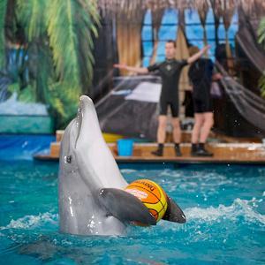 Дельфинарии, океанариумы Щербинки