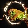 Цирки в Щербинке