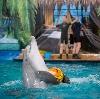 Дельфинарии, океанариумы в Щербинке